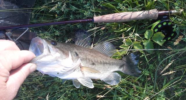 Ultralight fly fishing fish trip last saturday for Ultralight fly fishing